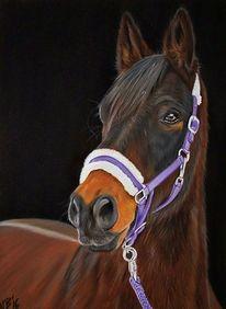 Zeichnung, Pastellmalerei, Pferde, Tiere
