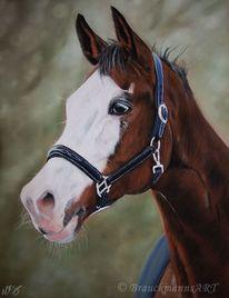 Pastellmalerei, Tiere, Tierzeichnung, Tierportrait