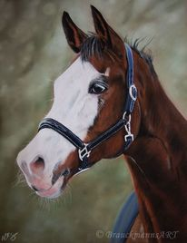 Pferde, Pastellmalerei, Pferdeportrait, Panpastel