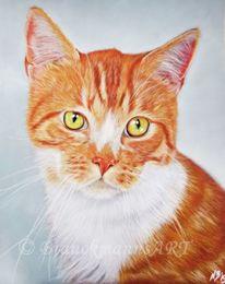 Pastellmalerei, Tiere, Haustier, Kater
