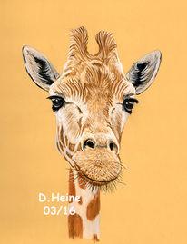 Kreide, Tiere, Pastellmalerei, Zeichnungen