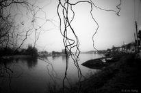 Stimmung, Landschaft, Baum, Elbe