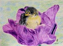 Tulpen, Vogel, Zeichnungen,