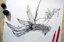 Modern, Tuschezeichnung, Natur, Mais