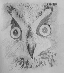 Eule, Zeichnung, Zeichnungen, Portrait