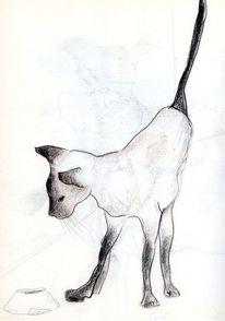 Zeichnung, Kinderbuch, Kater, Illustration