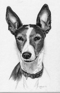 Portrait, Bleistiftzeichnung, Kohlezeichnung, Hund