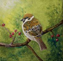 Tiere, Natur, Vogel, Spatz