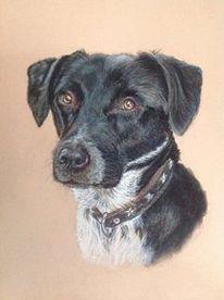 Pastellmalerei, Schwarz, Straßenhund, Portrait