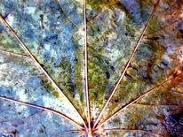 Blätter, Wolken, Regen, Fotografie