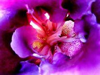 Schnitt, Einblick nahaufnahme, Fotografie, Blüte