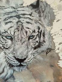 Weiß, Wildtier, Tiger, Malerei