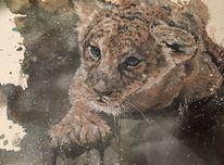 Tiere, Wildtier, Afrika, Löwe