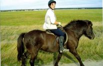 Pferde, Fotografie, Pinnwand