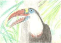 Vogel, Zeichnungen, Schrei