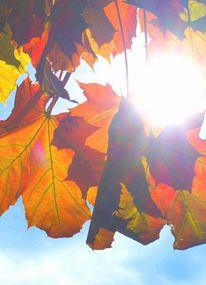 Herbst, Gegenlicht, Fotografie, Baum
