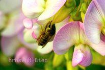 Biene, Rosa, Erbse, Blüte