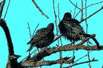 Stern, Frühling, Singvogel, Vogel
