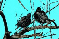 Äste, Frühling, Stern, Singvogel