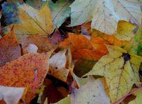Herbst, Blätter, Fotografie