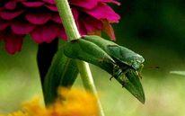 Blätter, Pink, Grün, Käfer