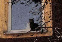 Kater, Katze, Romeo, Fotografie