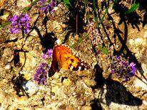 Morgensonne, Schatten, Schmetterling, Fotografie