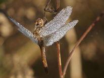 Herbst, Flügel, Libelle, Natur
