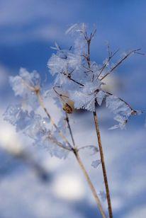 Eiskristalle, Schnee, Blau, Schatten