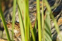 Sonne, Gras, Stein, Reptil