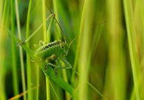 Grün, Gras, Wiese, Fotografie