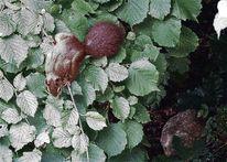 Eichhörnchen, Haselstrauch, Stein, Fotografie