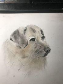 Kreide, Karton, Hund, Zeichnungen