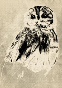 Tiere, Bleistiftzeichnung, Natur, Zeichnungen