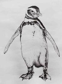 Stehen, Zeichnung, Kugelschreiber, Pinguin