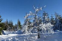 Schnee, Baum, Blau, Blauer himmel