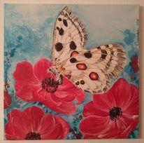 Leichtigkeit, Apollofalter, Natur, Schmetterling
