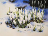 Frühling, Krokus, Schnee, Blumen
