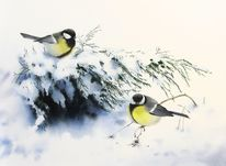 Schnee, Kohlmeise, Winter, Vogel