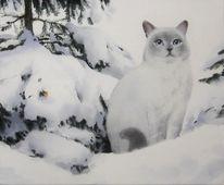 Katze, Tiere, Winter, Schnee