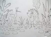 Busch, Pfau, Vogel, Zeichnungen