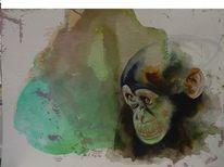 Bonobo, Schimpanse, Tiergesicht, Affengesicht