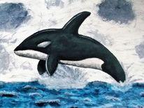 Schwertwal, Orka, Meer, Wasser