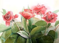 Aquarellmalerei, Rose, Blumen, Aquarell