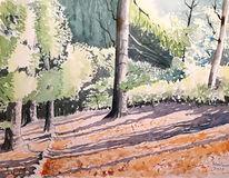 Tiefe sonne, Wald, Schatten, Baum