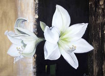 Ölmalerei, Amaryllis weiß, Blumen, Fotorealistische malerei