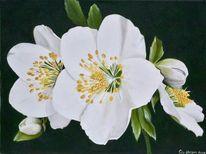 Ölmalerei, Fotorealismus, Christrose, Weiß