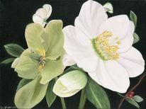 Christrose, Ölmalerei, Grün, Fotorealistische malerei