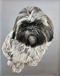 Hund, Ölmalerei, Fotorealismus, Tibet terrier