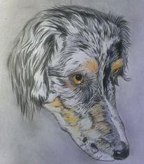 Buntstiftzeichnung, Hundeportrait, Zeichnungen,